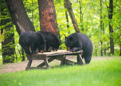 C-Bear-party-DM