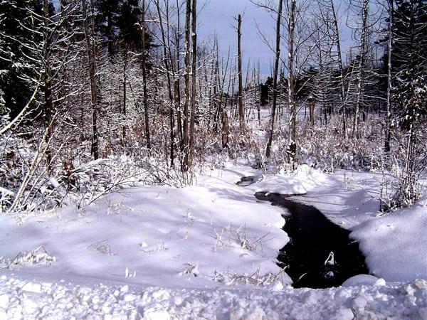 Otty Lake 2006 - DW