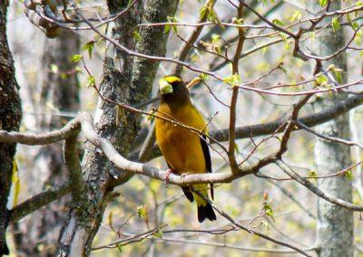 DanMurphy BirdPhoto4